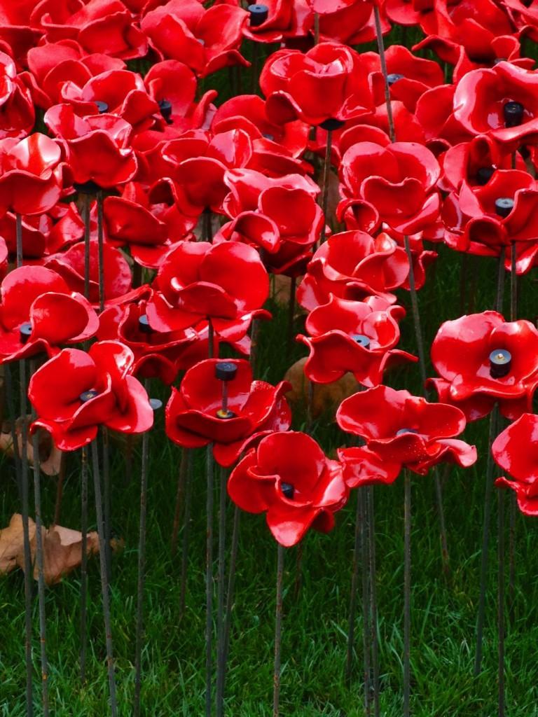 poppies-0002.jpg