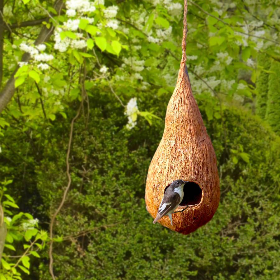 original_handmade-100-natural-coir-birds-nest.jpg