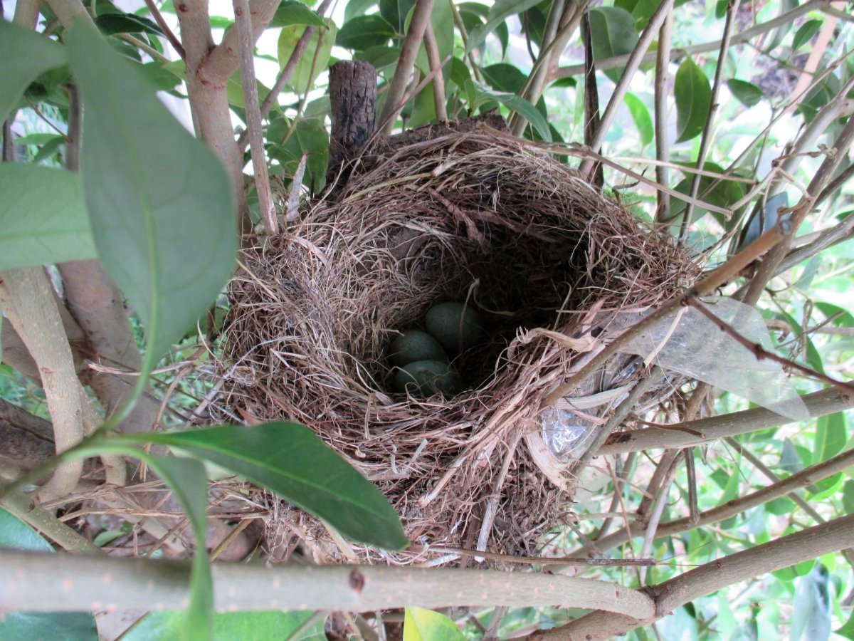 birds-nest-eggs.jpg