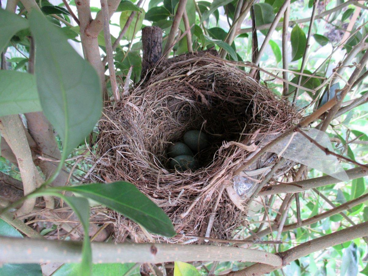 birds-nest-eggs.jpg