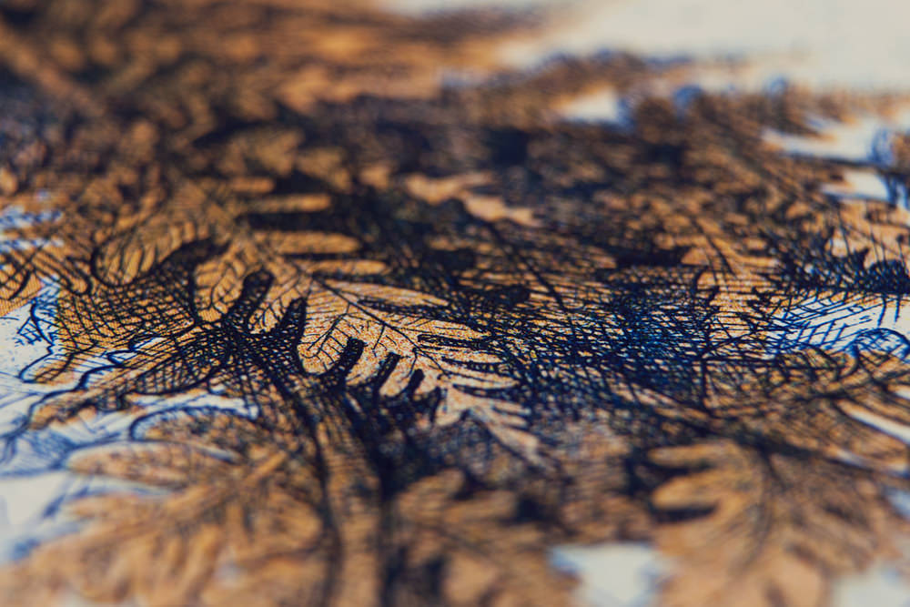 Close-up-of-Plant-Reverse-Illustration-Etching-by-Barbara-Bernat.jpg