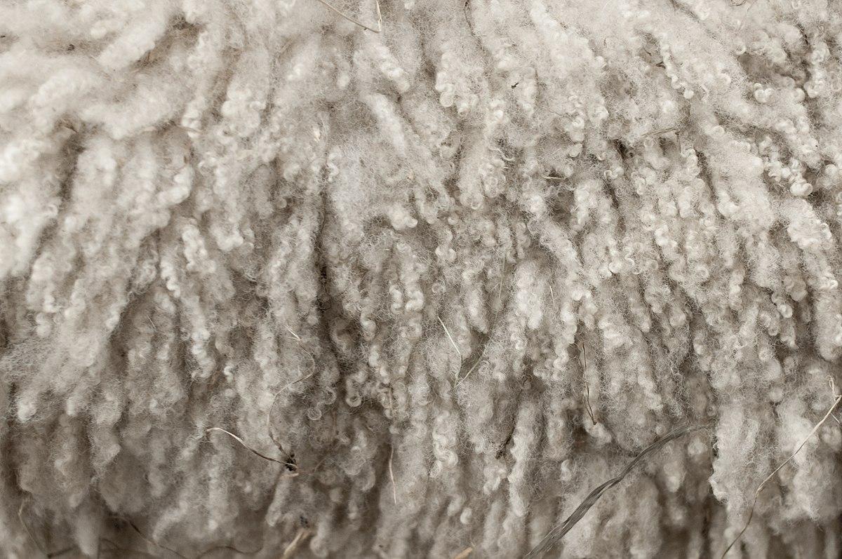 1200px-Royal_Winter_Fair_Wool_2.jpg