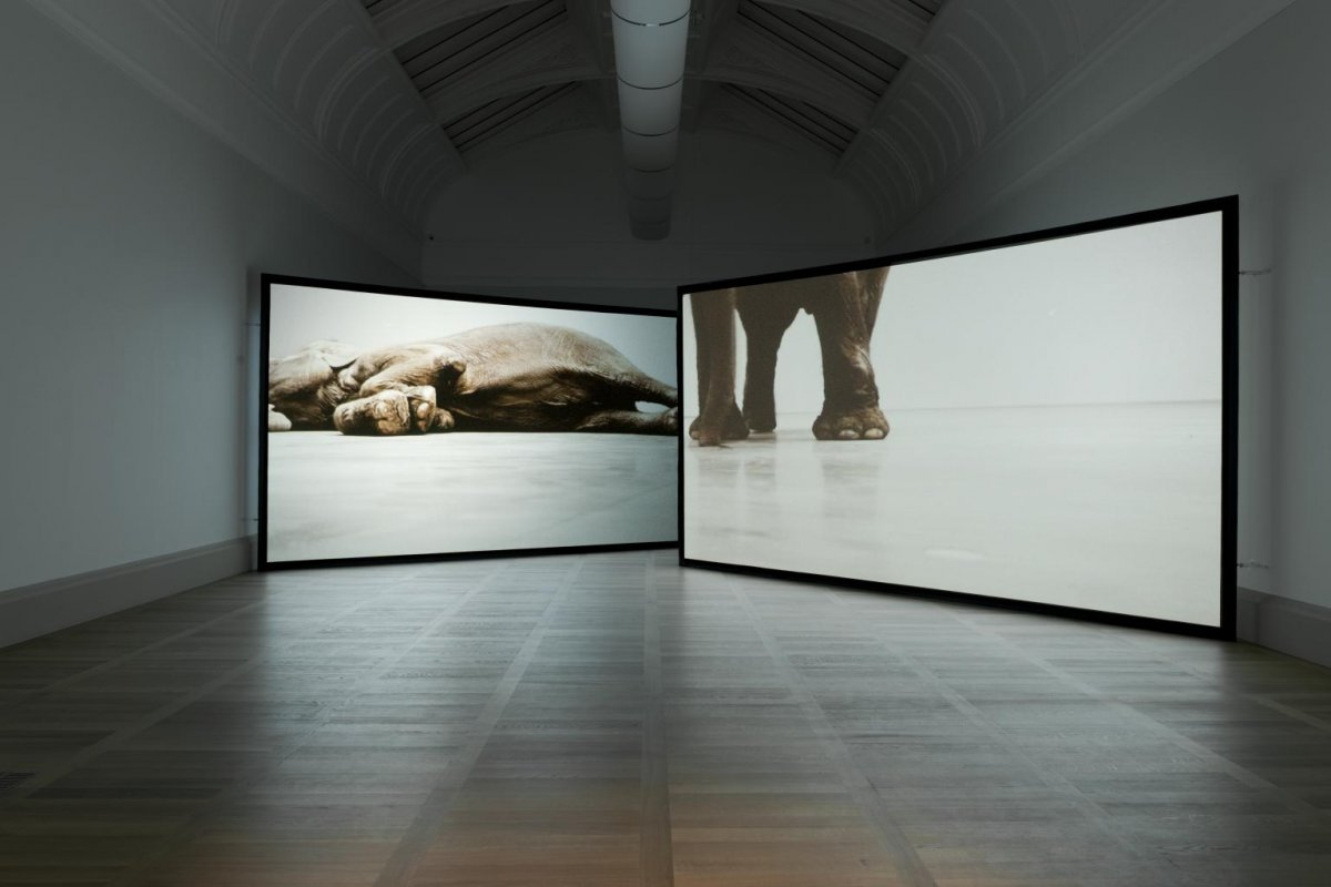 Play Dead; Real Time (this way, that way, the other way), Douglas Gordon, 2003, tate.jpg