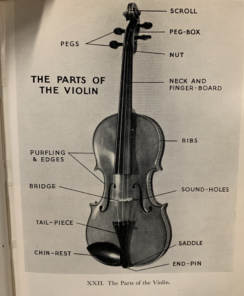 The Parts of the violin, Violins and violinists.JPG