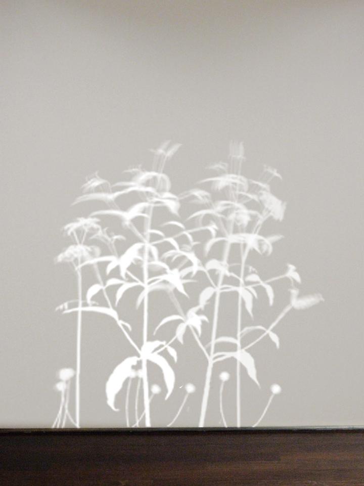 lightweeds.jpg