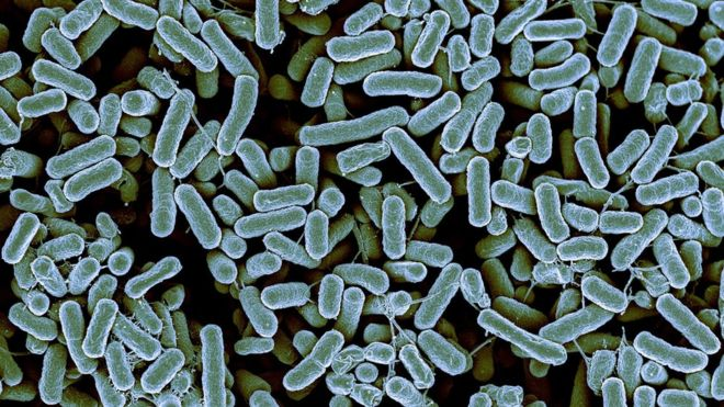 _85814776_c0260742-e._coli_bacteria,_sem-spl.jpg