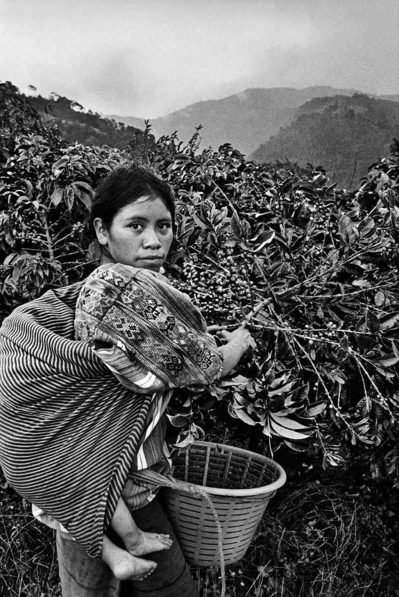 Coffee Worker holding her child..jpg