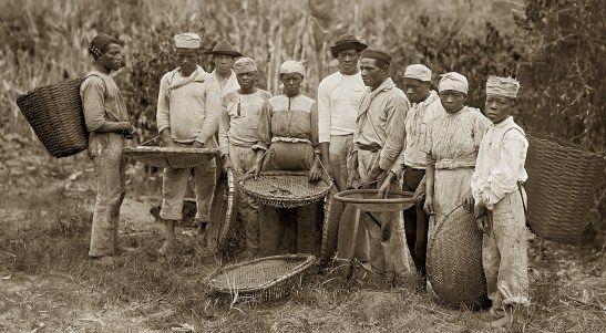 Coffee Slaves 1900's.jpg