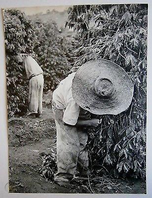 coffee-plantation-workers-brazil.jpg