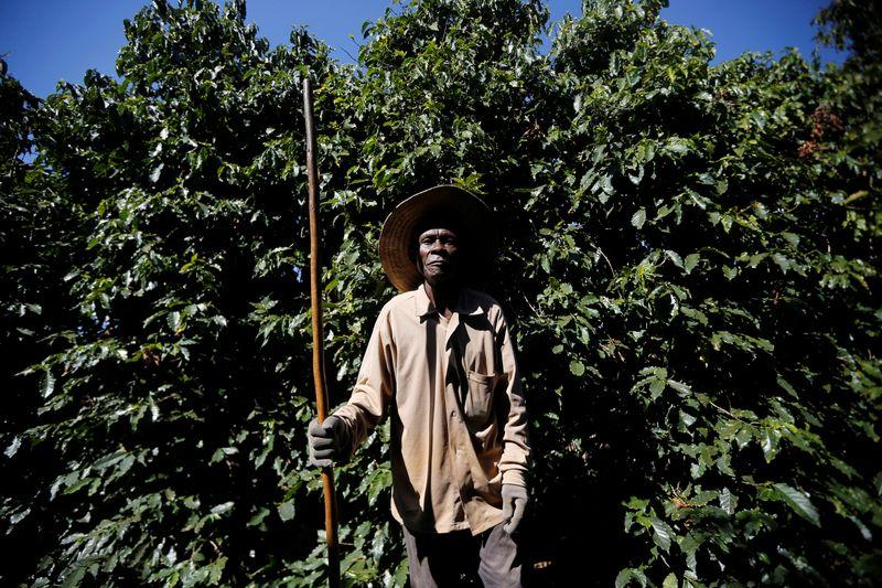 Coffee Workers Treated like Slaves.jpeg