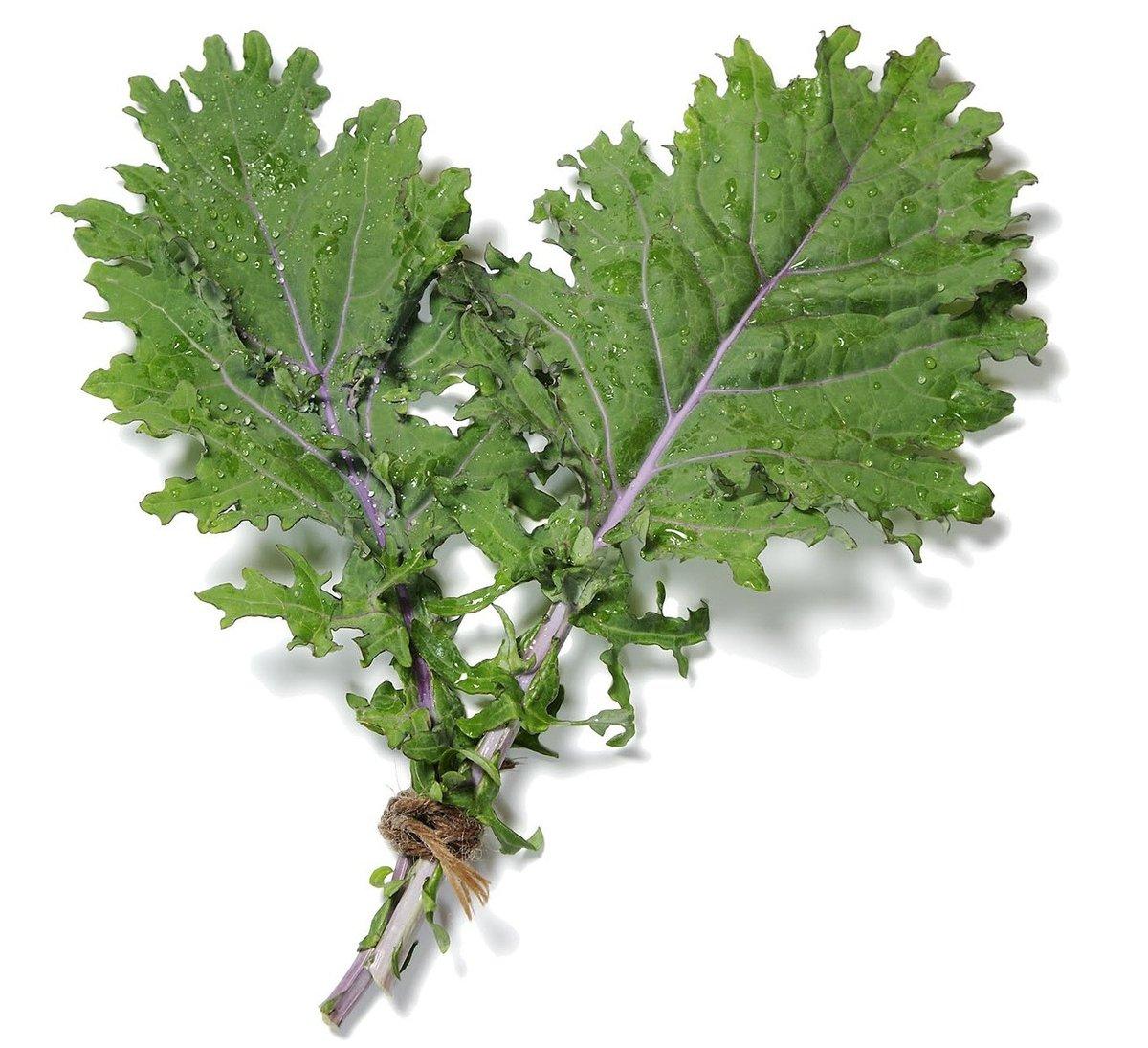 Red Russian Kale.jpg